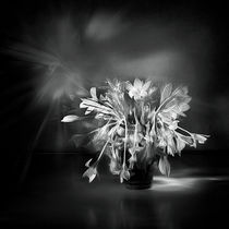 flower and light - II by Glory Denisov