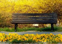 Mellow Yellow ~ by bebra von bebra