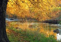 Herbstspaziergang von Marion Bönner