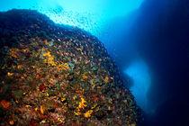 Unterwasserwelt Korfu von Norbert Probst