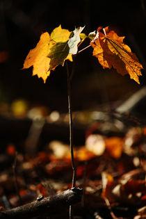 Goldener Herbst VI von meleah