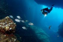 Taucher in Höhle mit Fischschwarm von Norbert Probst