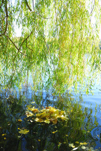 Autumn curtain of branches and leaves of the willow von Yuri Hope