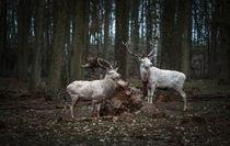 Weiße Hirsche by sabina-s