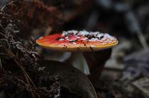 fungus von emanuele molinari