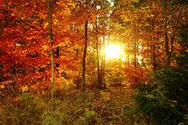 Herbstsonne by darlya
