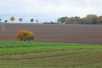 Herbstidylle by Gisela Peter