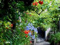'Garden Photo ~ by bebra' by bebra