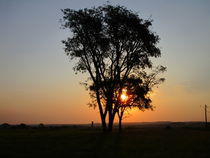 'silhouette tree at sunset' by Karise  Maria Bacca