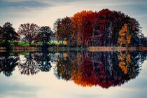 Herbst von Sandro Mischuda