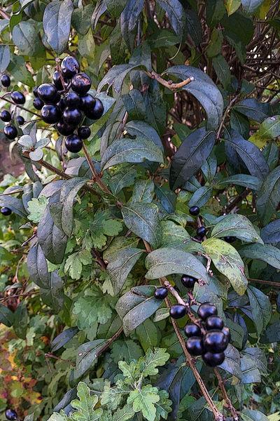 Fruits-of-bush-bun
