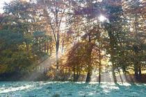 Sonnenlicht und Rauhreif von Bernhard Kaiser