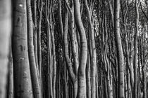 Gespensterwald von Daniel Burdach