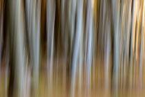 Geisterwald von Daniel Burdach