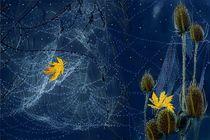 Spinnenherbst. by Heidi Schmitt-Lermann