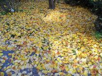 Herbstlicher Blätterteppich von Hans-Peter Scherbaum