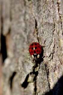 Ladybird von Jacqueline Kolesch