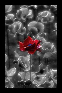 Red Poppy von Doug McRae
