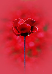 Poppy   by Doug McRae