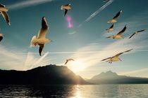 Seagulls- Möwen am See von lisebonne