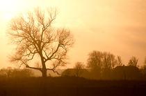 Rural Sunset von Janis Upitis