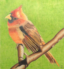 Cardinal Bird by Laurence Collard