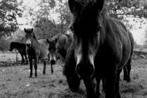 The Horses von Ronny Schmidt