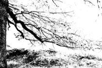 Herbsttage 3 von Ronny Schmidt