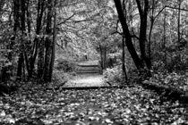 Herbsttage 1 von Ronny Schmidt