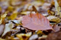 Autumn leaves by Zornitsa Yordanova