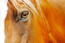 Pferdeauge von cavallo-magazin