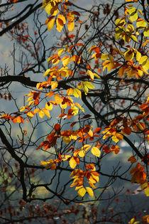 Goldener Herbst VIII von meleah