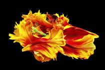 Flame von Brian  Fry