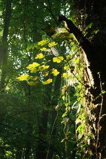 Lichteinfall im frühherbstlichen Wald von Sabine Radtke