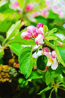 Apfelblüte V von Uwe Ruhrmann