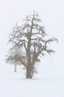 Nebel II by Uwe Ruhrmann
