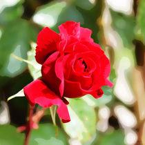 rote Rose I von Uwe Ruhrmann