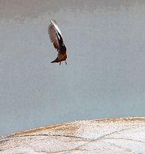Taube I von Uwe Ruhrmann
