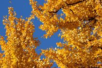 Autumn Leaves Herbstfarben V- Love Edition von lisebonne