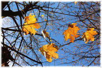 Autumn Leaves by mario-s