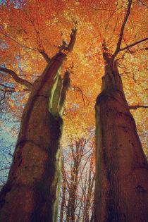 Autumn Leaves von mario-s