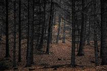 Black Forest von Kai Jarchow