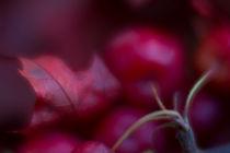 Herbstzeit / 6 von Heidi Bollich