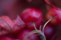 Herbstzeit / 7 von Heidi Bollich