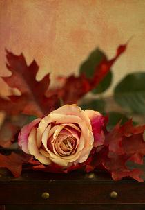 Herbstzeit / 5 by Heidi Bollich