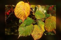 Brombeerblätter im Herbst von Sabine Radtke