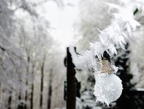Der erste Frost by Michael Blahout