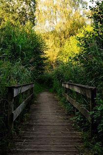 Die Brücke by Michael Blahout
