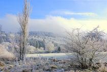 Nebel über den Höhen by Michael Blahout