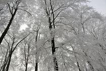 Winterwald by Michael Blahout